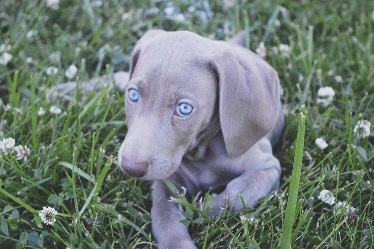 Bringing Home A New Pup